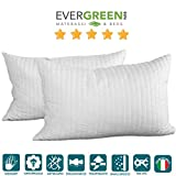 Evergreenweb - Occasione!...